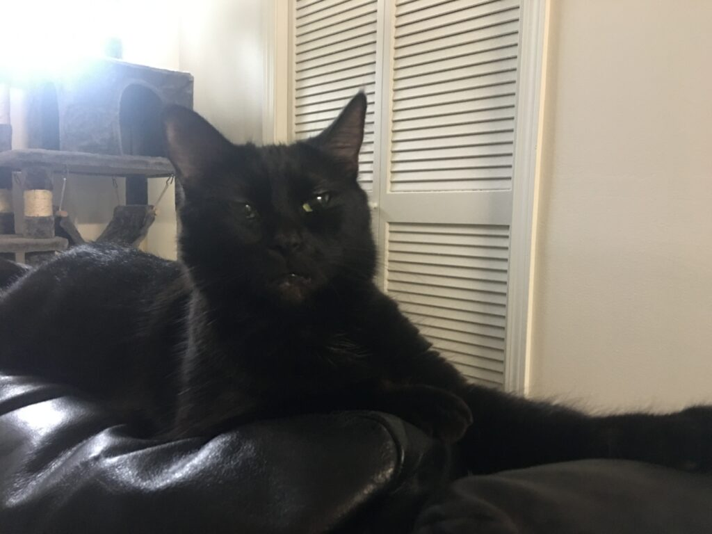 Lucy, the black cat
